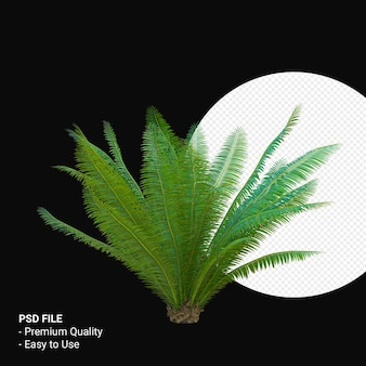 Dioon spinulosum 3d 렌더링 절연