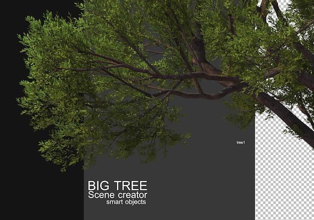 大きな木の前景レンダリングを表示する
