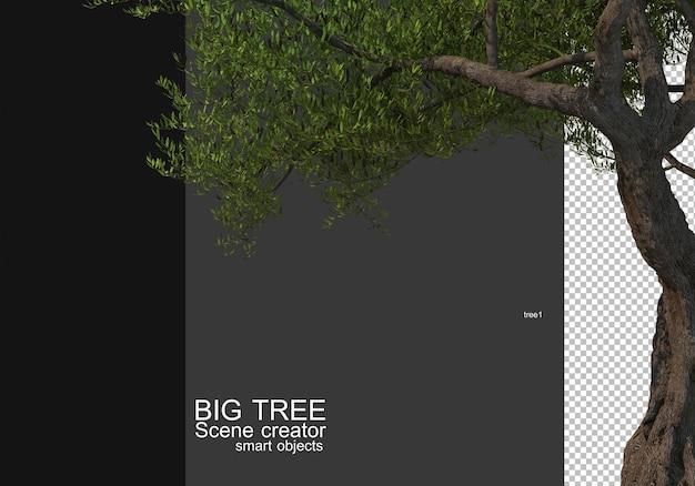 큰 나무 전경 렌더링 표시