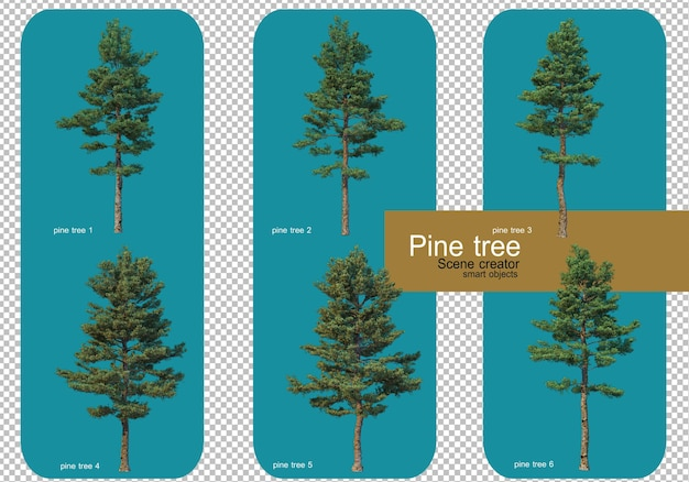 Display different patterns of pine trees