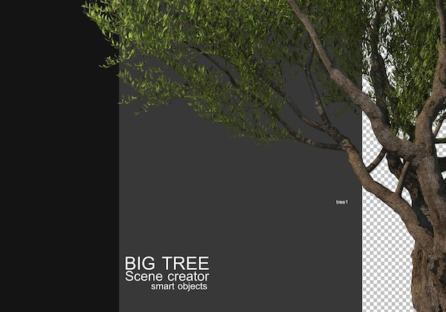 Display a large tree foreground rendering Premium Psd
