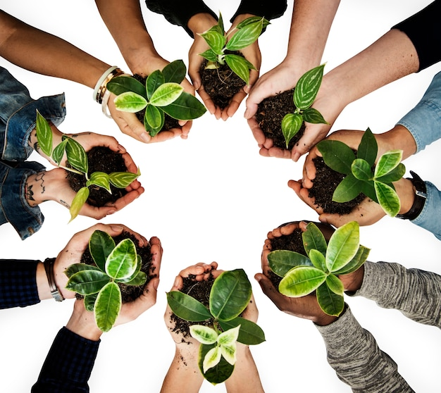 Diverse people holding plants in their hands