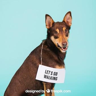 Dog mockup with signage