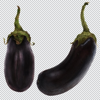 Eggplants. watercolor botanical illustration