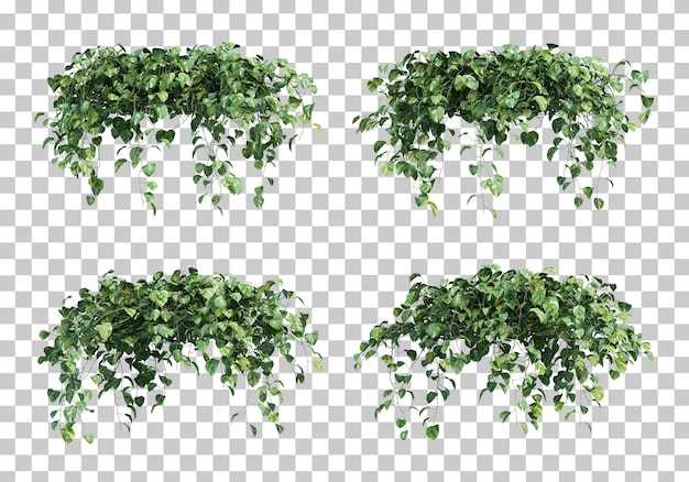 Epipremnum aureumの3 dレンダリング