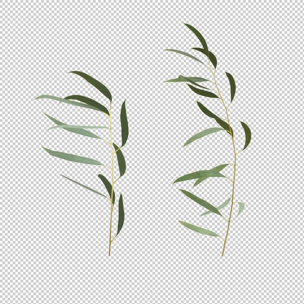유칼립투스 나뭇잎 격리