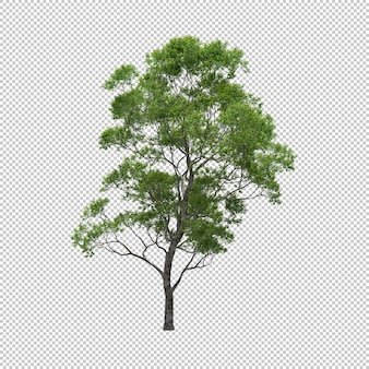 Eucalyptus tree with isolated background, tree 3d render