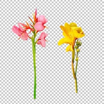 Euphorbia milii flowers watercolor