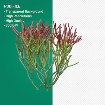Euphorbia tirucalli 3d 렌더링 절연