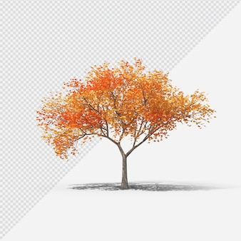 Fall  tree isolated rendering with shadow fifth shape