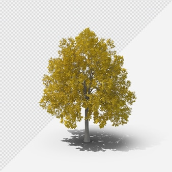 Fall tree isolated rendering with shadow first shape