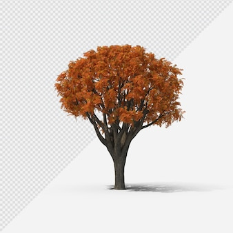 Fall  tree isolated rendering with shadow fourth shape