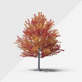 Fall  tree isolated rendering with shadow second shape