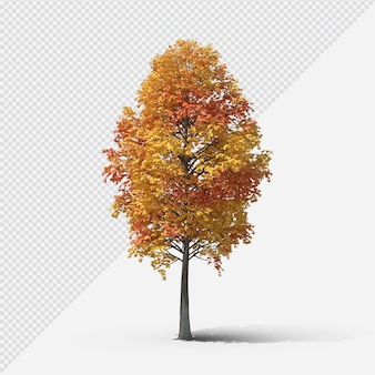 Fall  tree isolated rendering with shadow third shape