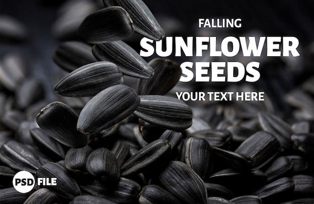 Falling sunflower seeds background