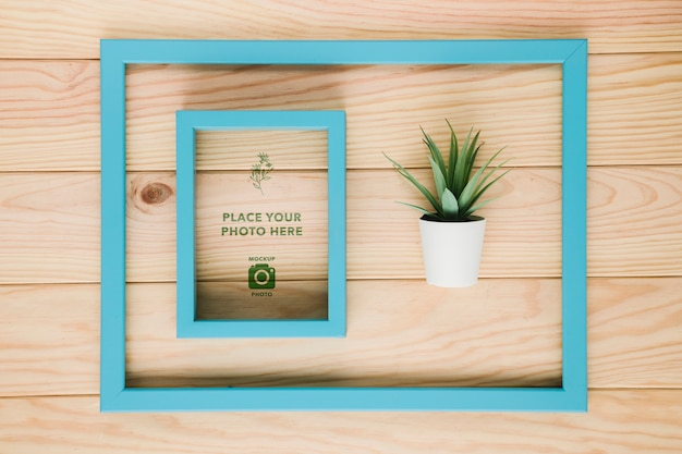Flat lay of frame in frame with succulent
