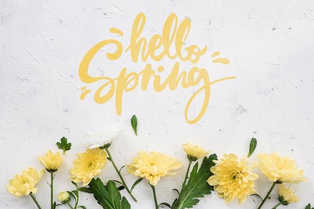 Piatto disteso di margherite di primavera