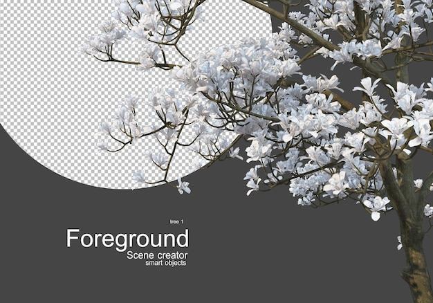 Flowering trees in front of the camera