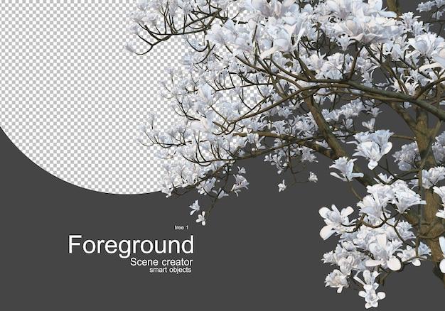 카메라 앞에서 꽃이 만발한 나무