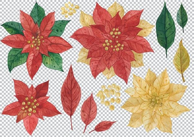 포인세티아의 꽃과 잎