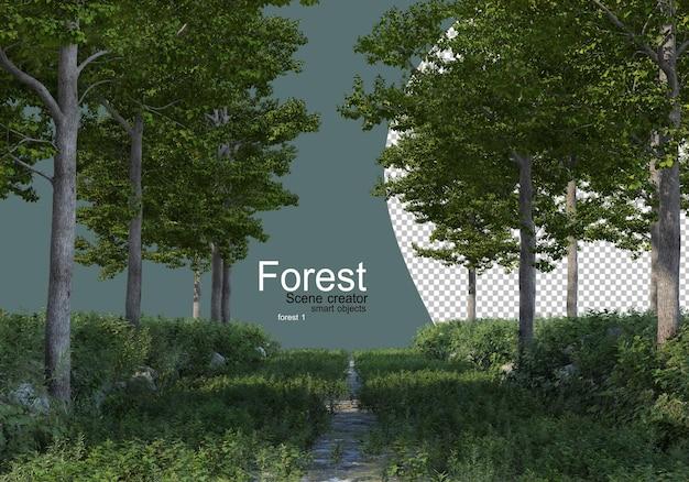 다양한 종류의 나무가있는 숲