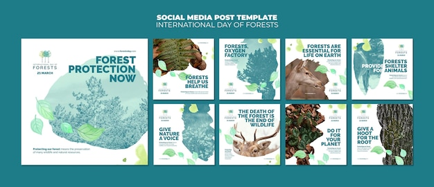 Forests day instagram posts template with photo