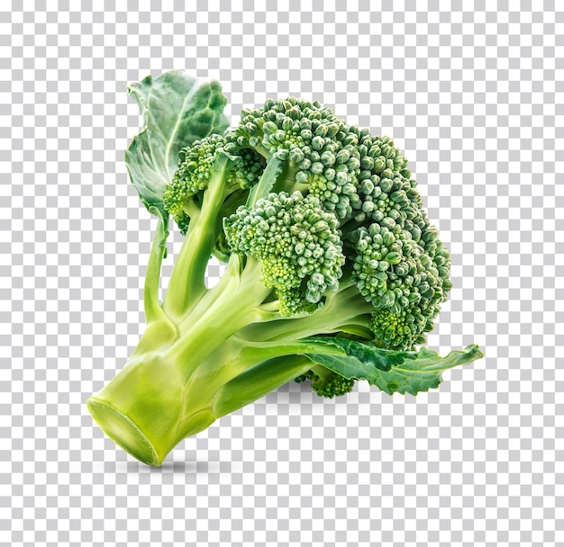 Fresh broccoli isolate