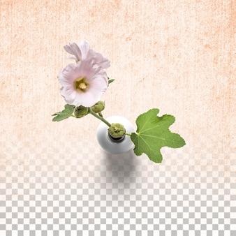 고립 된 흰색 꽃병에 신선한 꽃