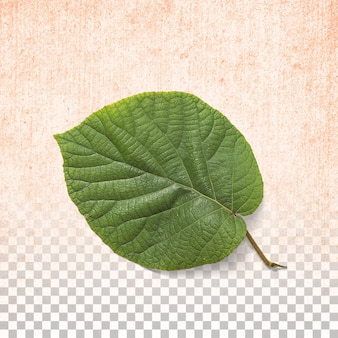 Fresh green leaf isolated on transparent background