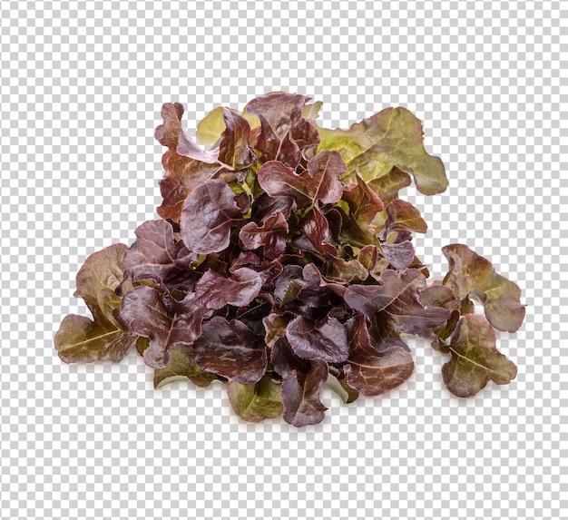 Fresh lettuce isolated premium psd