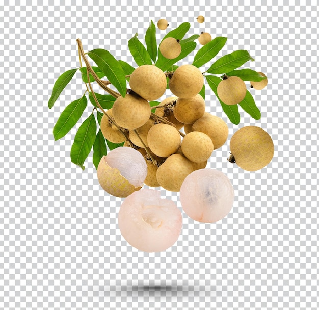 Fresh longan with leaves isolated premium psd