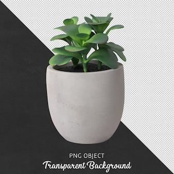 分離された花瓶の多肉植物の正面図