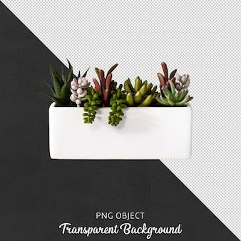 分離された白い花瓶の多肉植物の正面図