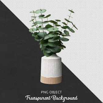 Front view of pilea in white vase isolated