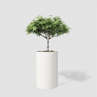 Front view of plant in pot in 3d rendering