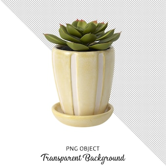 Front view of succulent in vase isolated