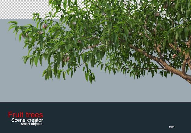 다양한 종류와 색상의 과일 나무