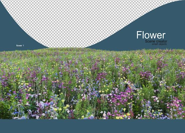 잔디에 자라는 많은 다채로운 꽃의 정원