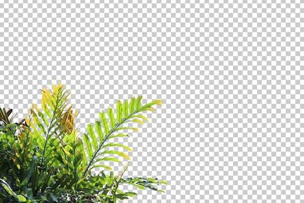 Golden leather fern foreground isolated