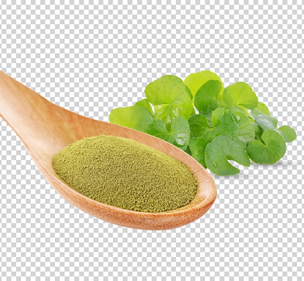 Готу кола, азиатский пырник, центелла азиатская, аюрведические лечебные травы в деревянной ложке премиум psd.