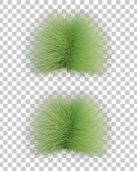 Gracillimus乙女の髪の草の3 dレンダリング