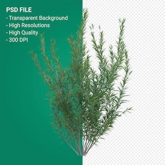 Трава дерева 3d визуализации, изолированные на прозрачном фоне