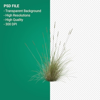 Grass tree 3d render isolated on transparent background