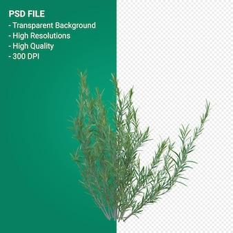 잔디 나무 3d 렌더링 절연