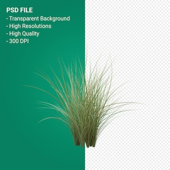 Grass tree 3d render isolated