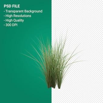 Трава дерево 3d визуализации изолированные