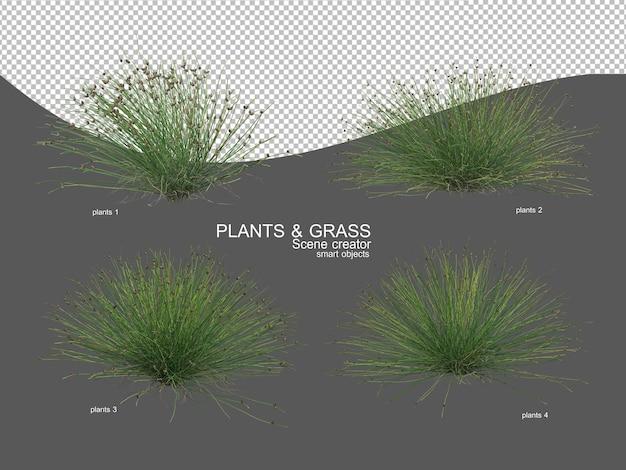 Grasses of various sizes and types