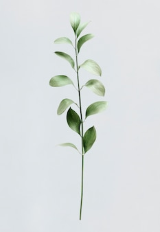 Green foliage on white background