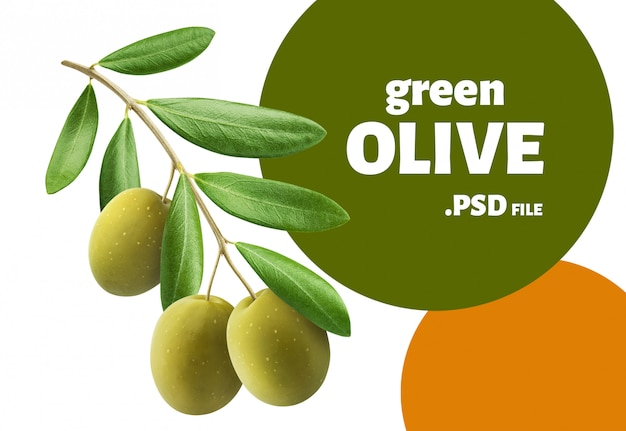 Green olives tree branch isolated, design for packaging
