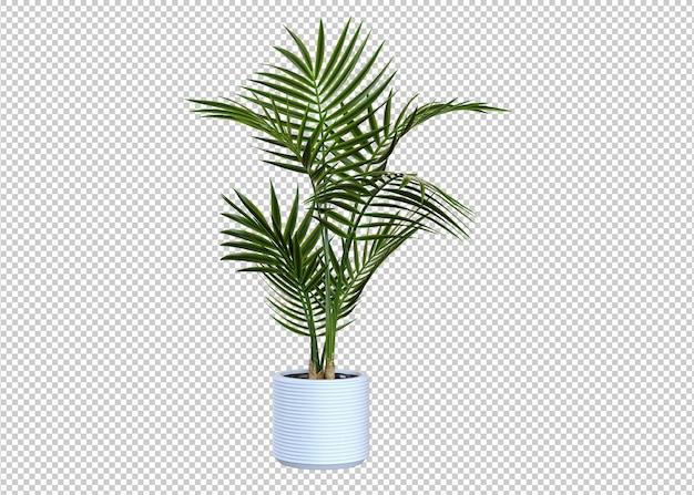 Зеленое растение, изолированные на белом фоне